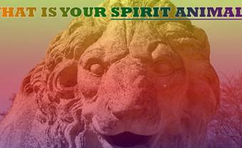 spiritanimal