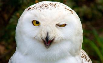 owl-site