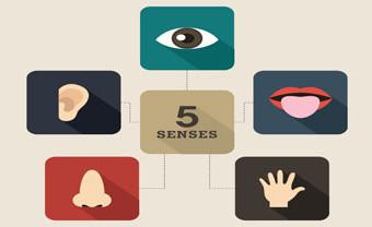 senses-site