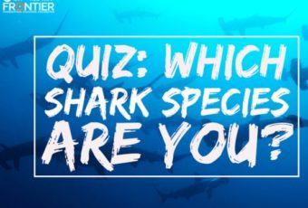 What Shark Species Are You?