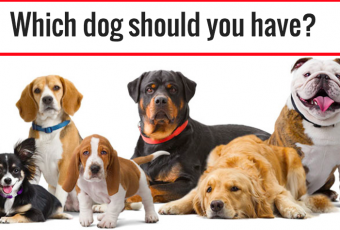 What Type Of Dog Should You Have?