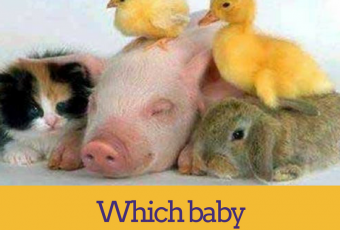 What Baby Animal Are You?