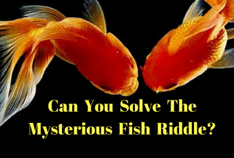 Can You Solve The Mysterious Fish Riddle??
