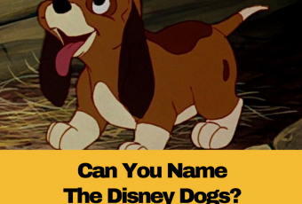 Only 1 In 50 Disney Fans Can Name These 18 Disney Dogs