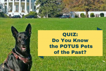Do You Know the POTUS Pets of the Past?