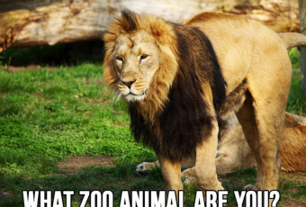 Which Zoo Animal Are You?