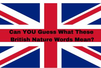 Can You Guess What These Rare British Nature Words Mean?