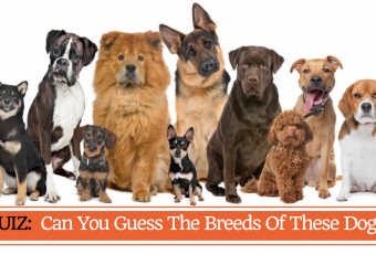 Can You Guess The Breeds Of These Dogs?