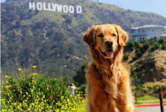 Quiz: Match The Dog To The Movie