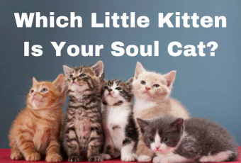 Which Little Kitten Is Your Soul Cat?