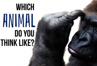 Which Animal Do You Think, Feel And Act Most Like?